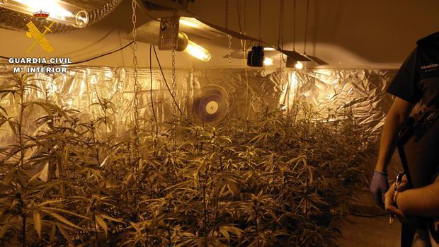 Imagen de archivo de una plantación de marihuana