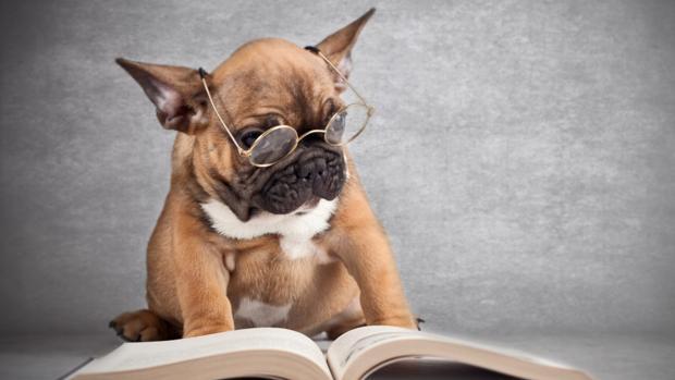 Las capacidades cognitivas de los perros no son tan grandes como se creía