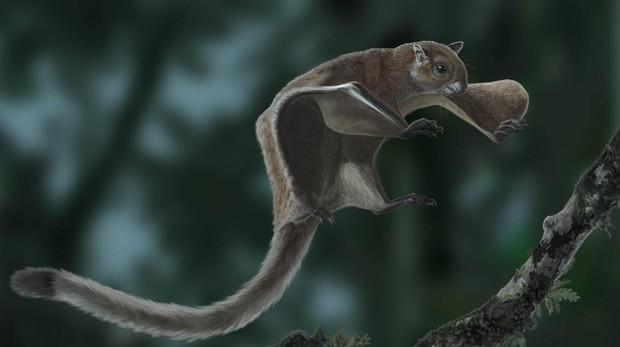 Recreación de la miopetaurista neogrivensis o ardilla voladora más antigua del mundo