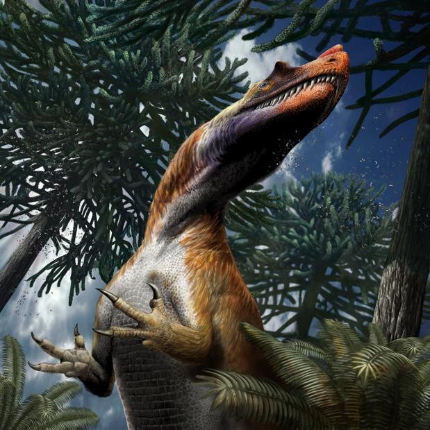 Saltriovenator estaba probablemente cubierto con protoplumas filamentosas. La presencia de cuernos en los huesos lagrimales y nasales se deduce de su parentesco cercano con los dinosaurios que poseen esas onamentaciones craneales