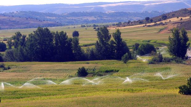 Casi todos los cultivos se verán beneficiados por las lluvias caídas