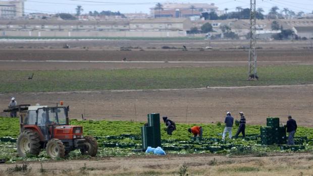 Trabajadores del campo en una explotación agrícola