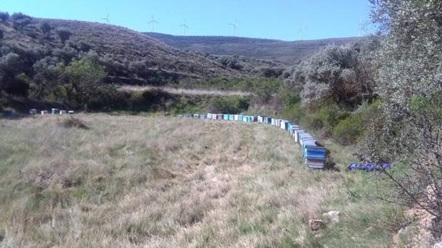 Paraje de Grisel (Tarazona) en el que fueron localizadas las colmenas robadas en Tarazona