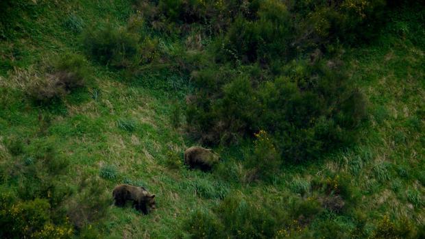 Seis sencillas pautas para evitar «encontronazos» con osos