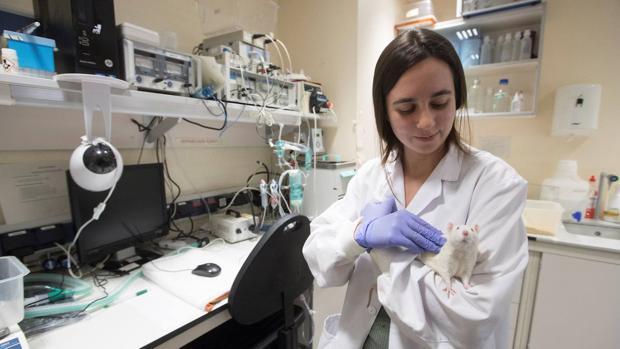Unos 800.000 animales se utilizan para experimentación cada año en España