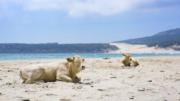 La playa de Bolonia se presenta como una de las últimas playas vírgenes de Andalucía.