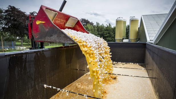 Vista de una máquina que transporta los huevos contaminados para desecharlos en una granja avícola