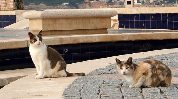 Los gatos deberán llevar microchip y ser registrados ante las autoridades