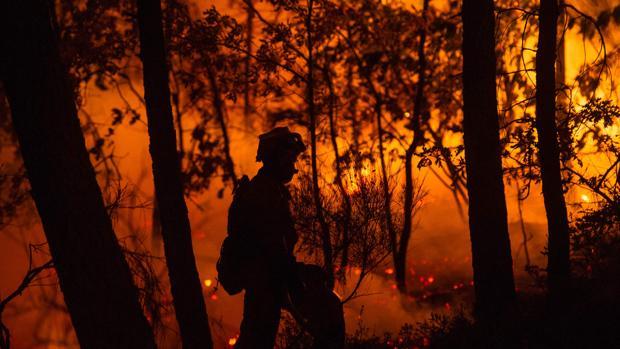 Ochocientos bomberos luchan en Portugal contra un gran incendio forestal